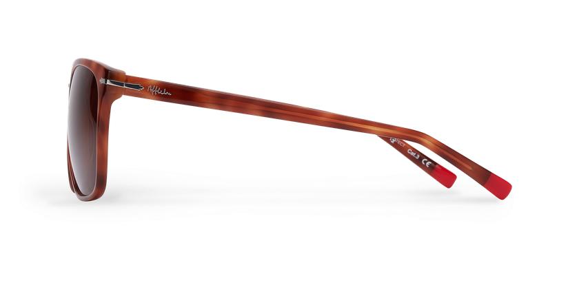 Óculos de sol homem DARWIN tartaruga  - Vista lateral