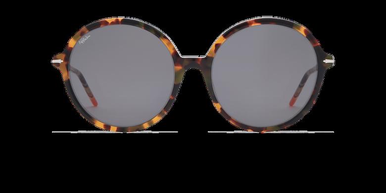 Gafas de sol mujer KENDAL carey